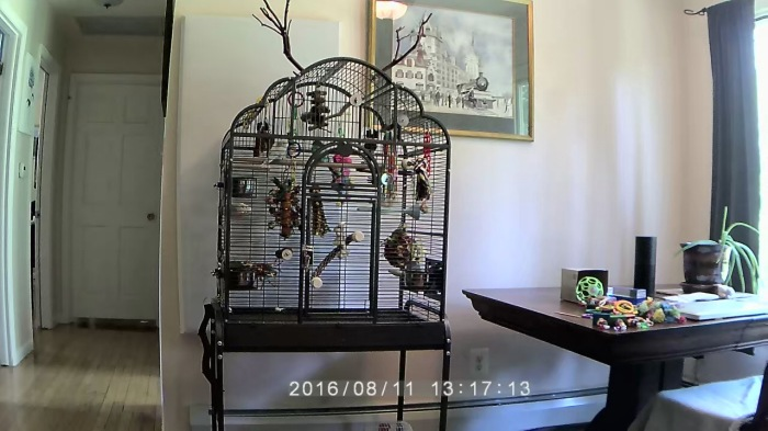 10 tips for optimal bird cageplacement