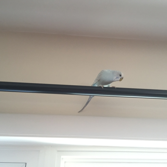 Top 10 reasons owning budgies is like going to a gentleman's club